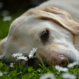 犬が夏バテした時の症状は?予防方法やなりにくいごはんのあげかた