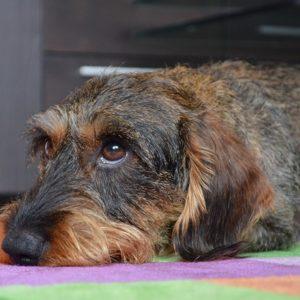 犬が夏バテした時の症状や対処法、食欲ない時におすすめな方法
