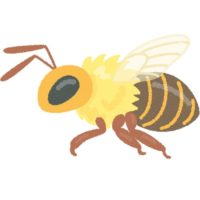 蜂に刺された時の症状と応急処置の仕方、薬は何がいいの?