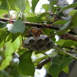 蜂の巣がベランダに!駆除する方法や駆除後にするべき対応は
