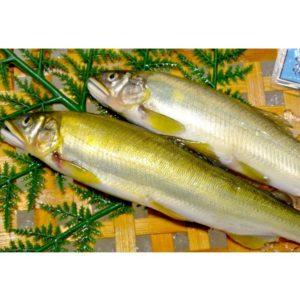夏の旬の魚を食べよう!鮮度の見分け方や新鮮なスーパーの探し方