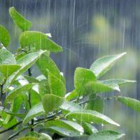 大雨警報が出たのに雨が降ってない。発令の基準は?解除はいつになる?