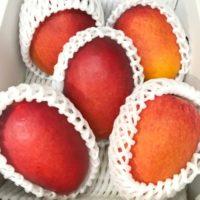 マンゴーを切った後に熟すことはできる?甘くない時においしく食べる方法は?