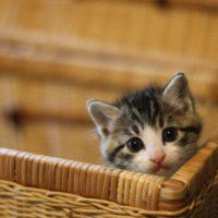 子猫がミルクを飲んでくれない時は?産まれたての捨て猫の授乳体験記