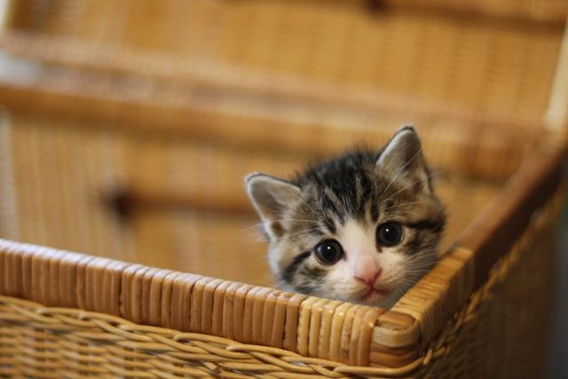 子猫 ミルク